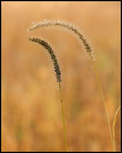 TW Grass