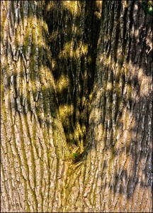 Texture and Shadow