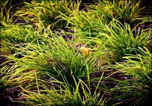 Grass Patterns