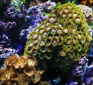 Under the Sea, part deux